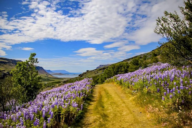 8 Day Summer Circle Tour, Ring Route of Iceland with Snæfellsnes Peninsula