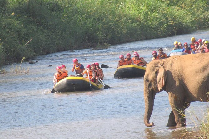 Elephant in Wild Sanctuary, Trekking and Rafting in Chiang Mai