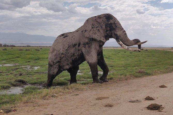 Amboseli Day Trip!!