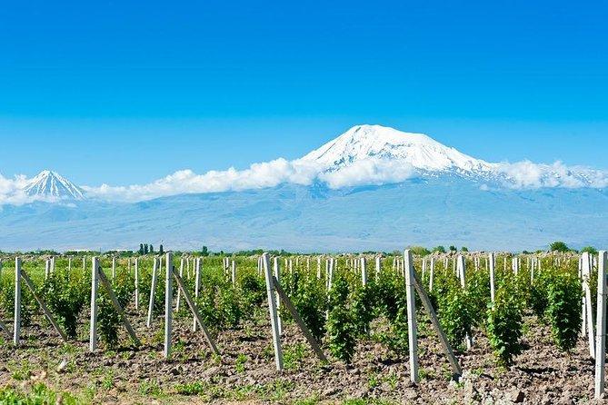 Private tour: Khor Virap, Hin Areni (wine tasting), Bird's Cave and Noravank