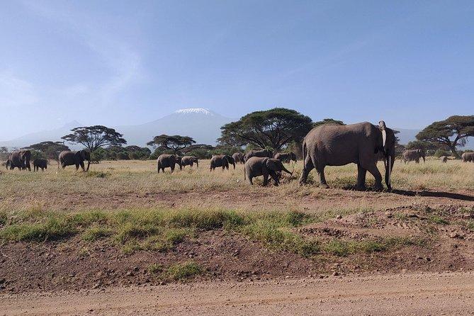 Amboseli Overnight Trip