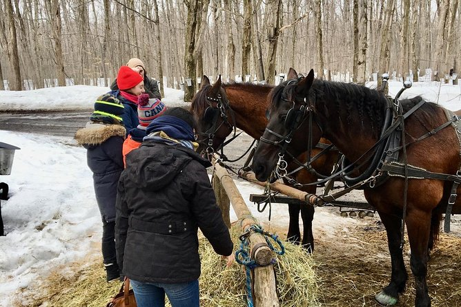 Sugar Shack Maple Syrup Private Day Tour with lunch from Montreal