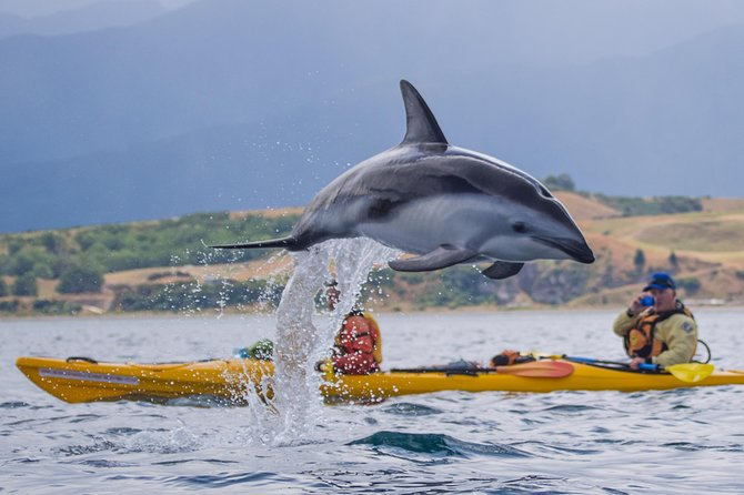 Wildlife Sea Kayaking Tour - Kaikoura