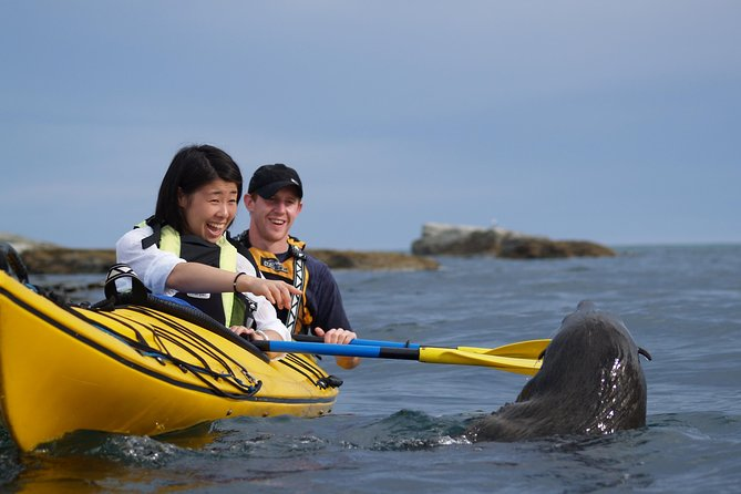 Private Wildlife Kayaking Tour - Kaikoura