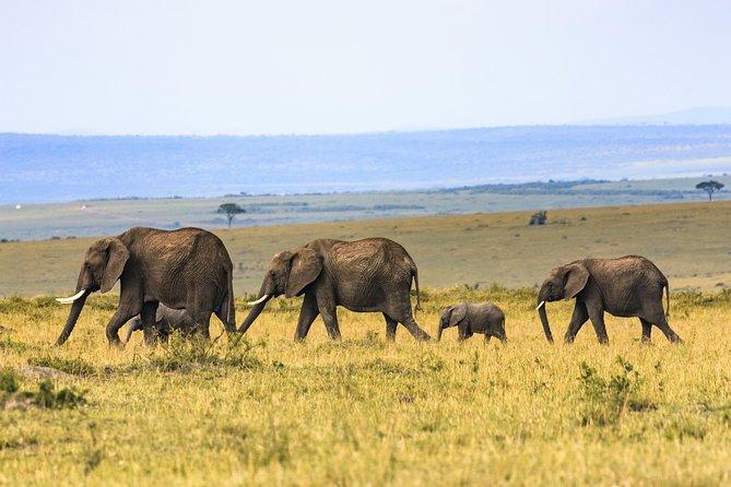 Ngorongoro crater day trip from Arusha