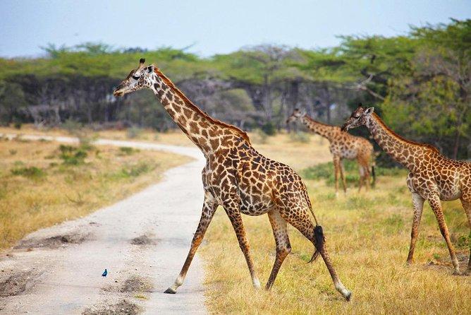 3 Days Selous safari from Dar es salaam, Tanzania