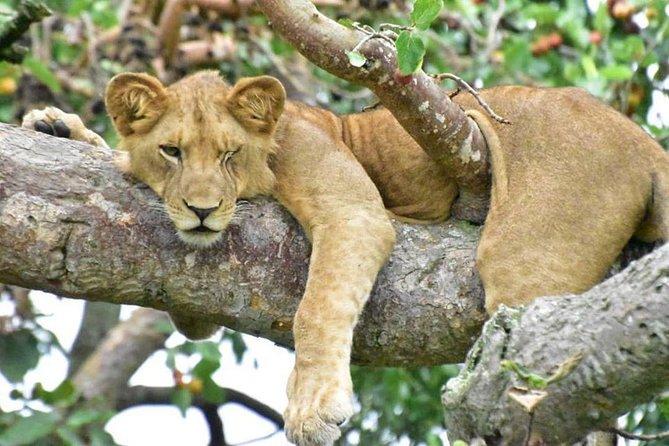 8 Days Exclusive Uganda Primates and Wildlife Tour