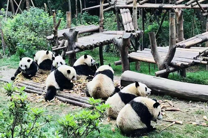 4-Hour Private Trip to Chengdu Giant Panda Research Center