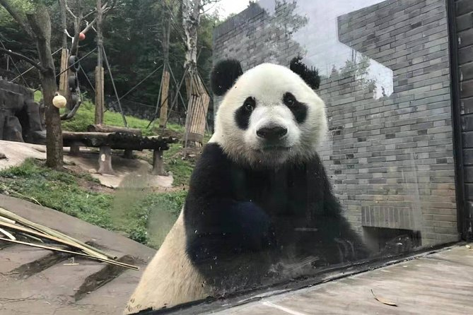 All Inclusive Customizable Chengdu Full Day Panda Tour