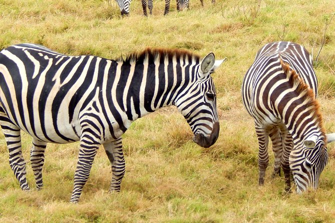 Lake Nakuru National park Day Tour From Nairobi photo 9