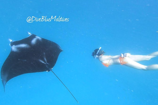 Manta Snorkeling Excursions - half/full day trip w/accommodation at Dhigurah