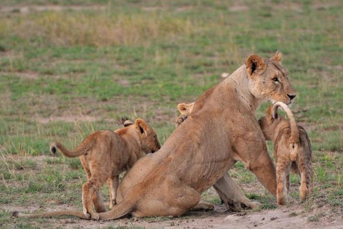3 Days All Inclusive Tarangire & Ngorongoro Safari