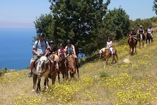 Alanya Horse Riding (Half Day) - Horse Safari in Alanya