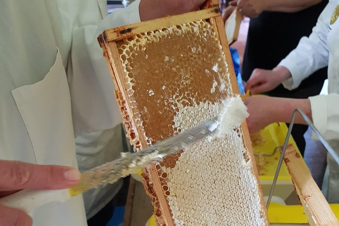 Uncapping cells to release the gorgeous honey!