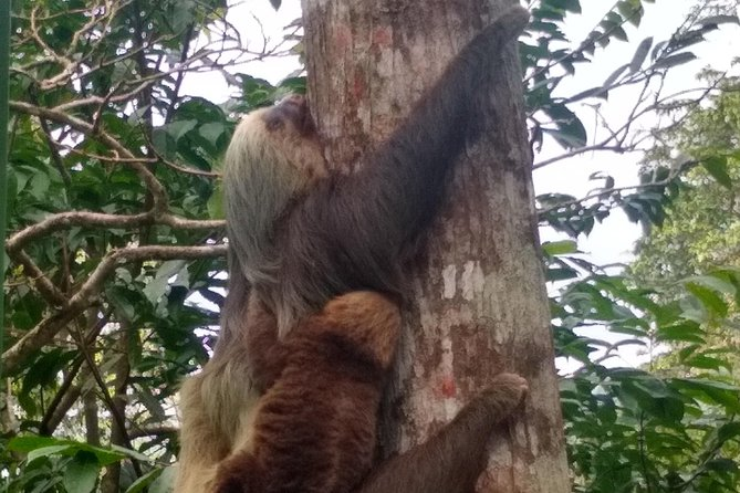 Bijagua Frogs, sloth and llanos de Cortes waterfall combo