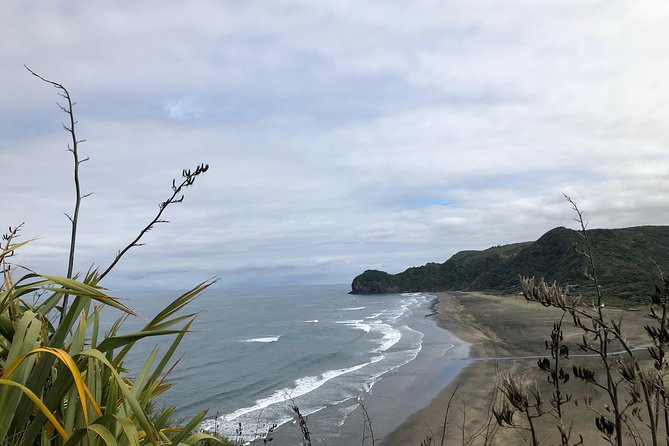 Discover Auckland's Black Sand Beach and Rainforest with waterfalls & Bush Walks