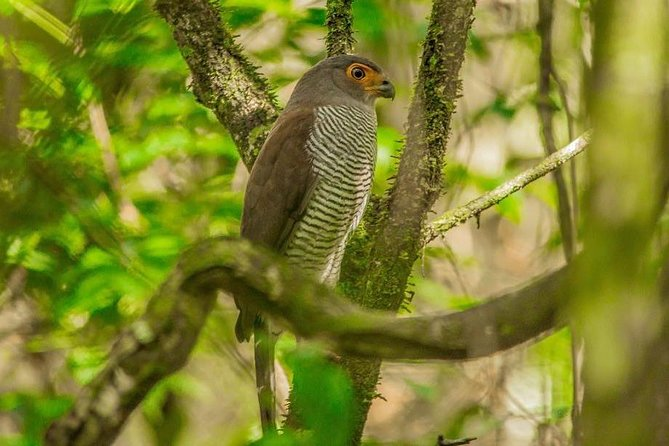 El Pilar Maya Forest Birding Tour All Inclusive