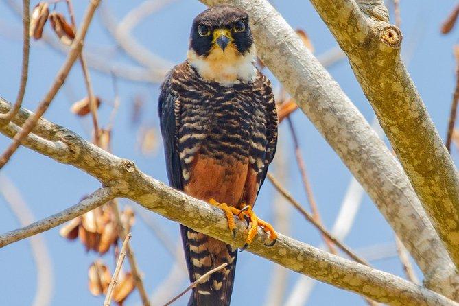 Rio Maya Bird Sanctuary and Spanish Lookout all Inclusive Birdwatching Tour