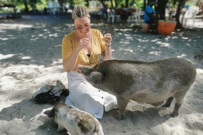 Pig Island Koh Samui by Speedboat with Sunset (Exclusive Pig Feeding Experience) photo 14