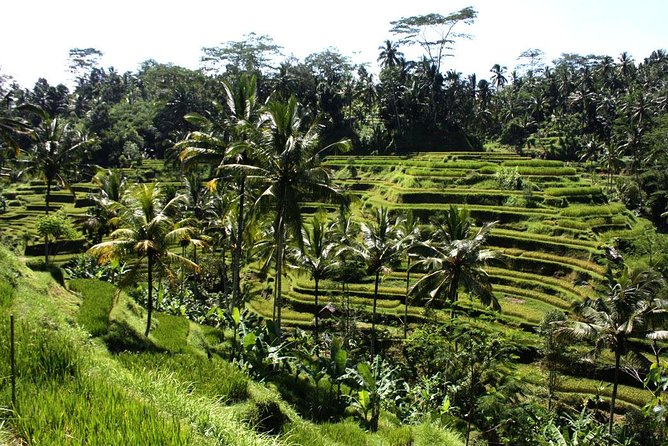 Private Bali Half Day Car Charter - Ubud Waterfall Tour