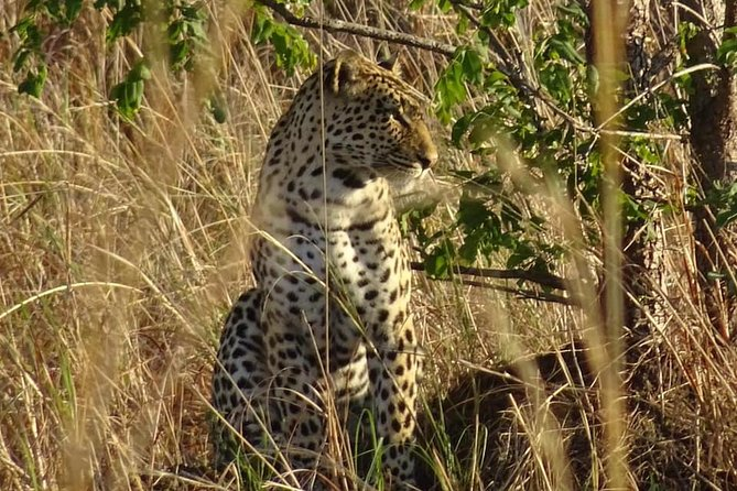 Chobe Safari Experience Day Trip from Livingstone photo 2