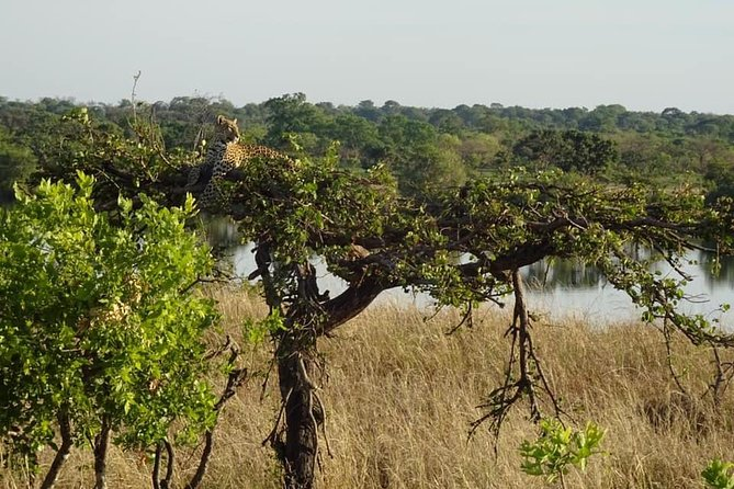 Chobe Safari Experience Day Trip from Livingstone photo 25
