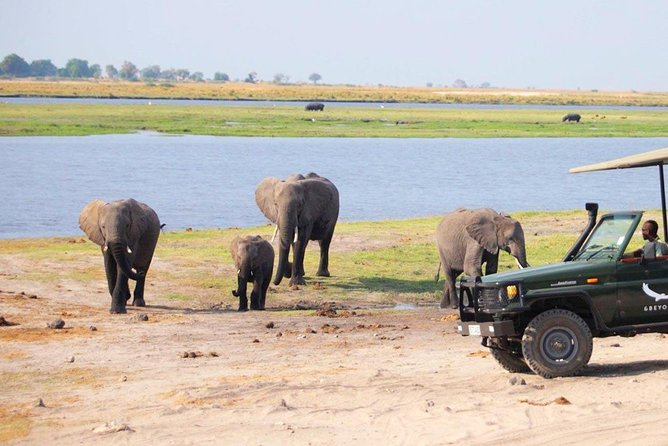 Chobe Safari Experience Day Trip from Livingstone photo 22