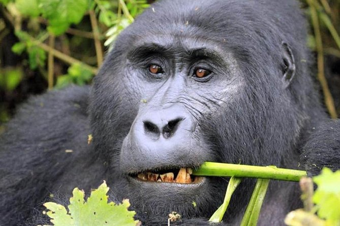 3 Days Gorilla Experience in Bwindi