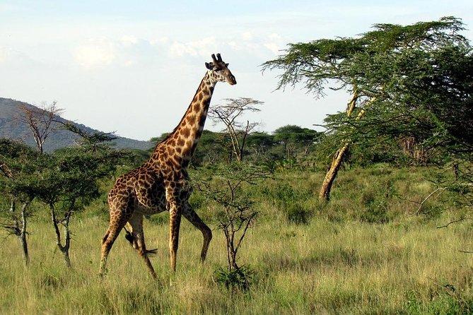 3 days - Lake Manyara, Ngorongoro Crater & Tarangire