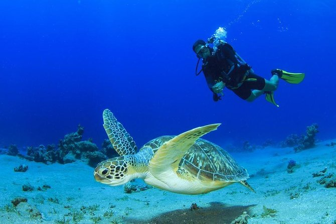 Scuba Diving for Beginners in Didim photo 2
