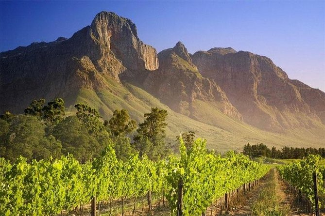 Robben Island & Private Winelands Tour - Incl Transportation