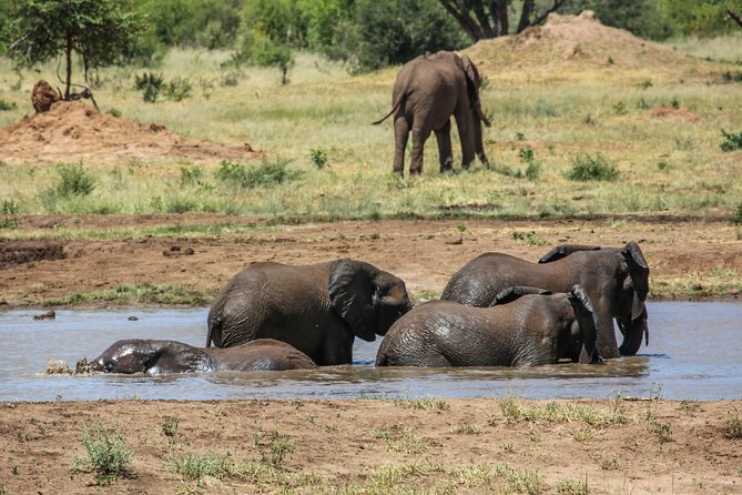 Discover Victoria Falls, Hwange National Park and Chobe National Park in 5 Days