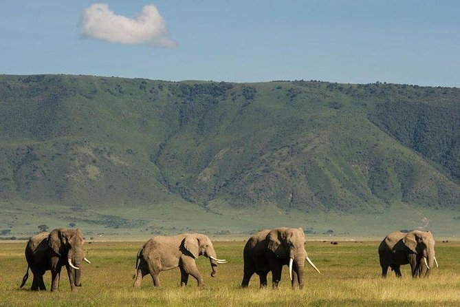 7 days-Lake Manyara, Olduvai Gorge, Serengeti, Ngorongoro Crater & Tarangire
