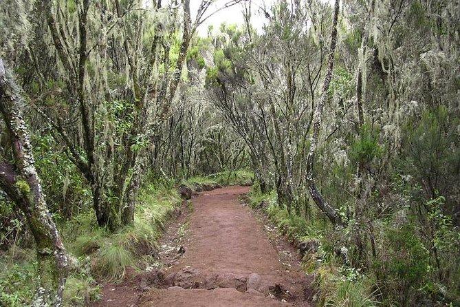 Marangu Route - 6 days Kilimanjaro Climb