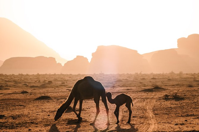 Petra & Wadi Rum: Full-day Trip
