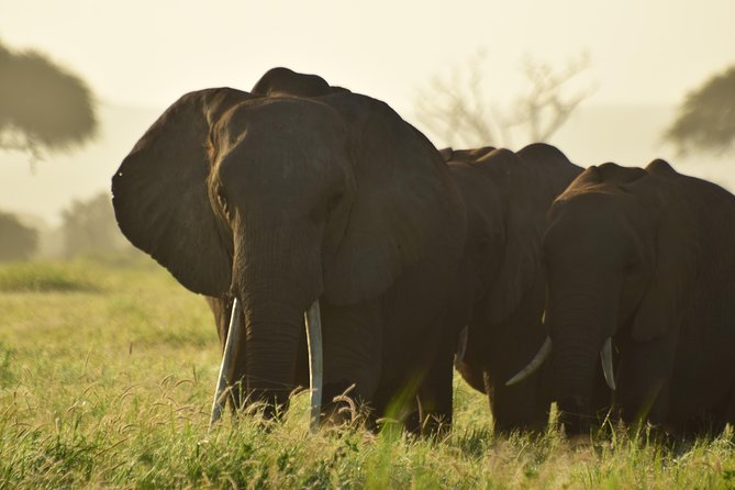 5 Days Amboseli,Lake Naivasha & Masai Mara