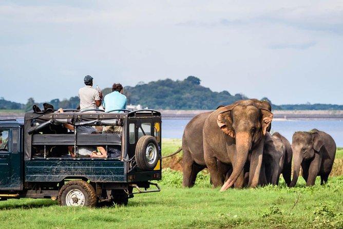 Jeep Safari to Minneriya National Park.