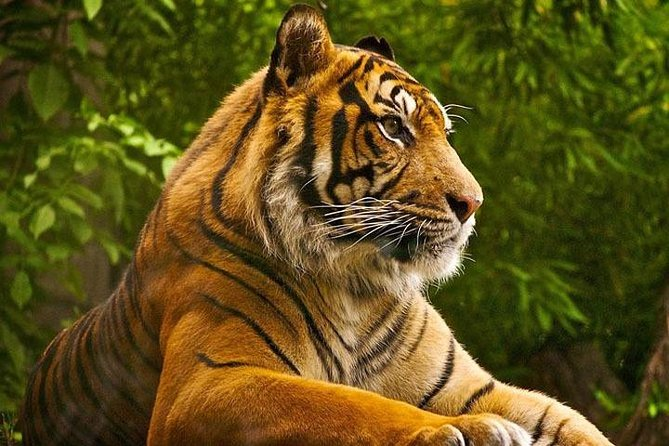 Explorer Golden Triangle Tour With Ranthambore