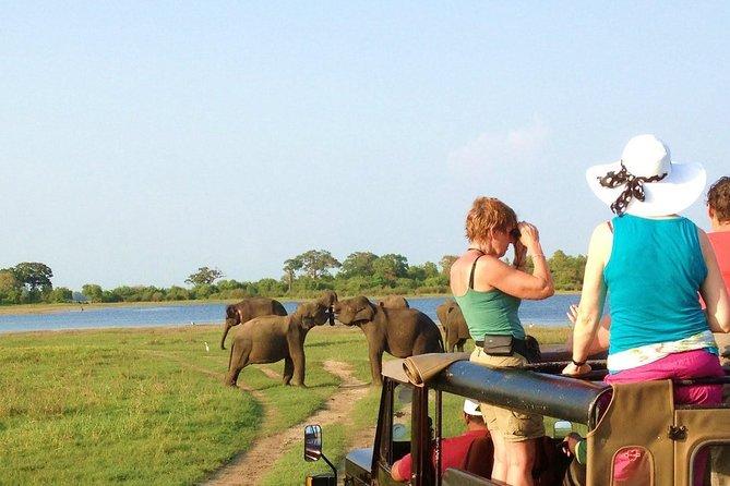 Jeep Safari to Kaudulla National Park.