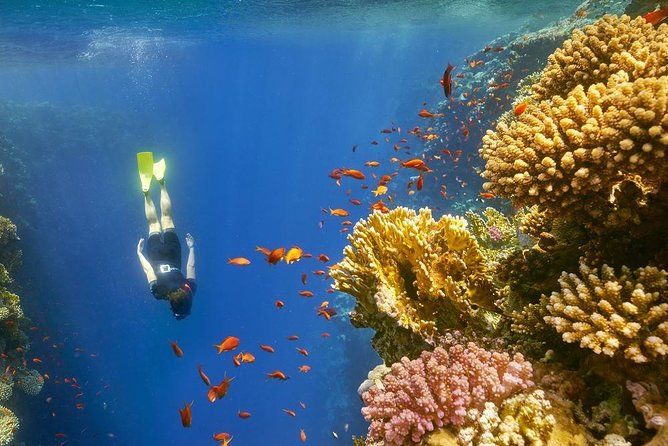 Day Tour From Luxor To Red sea