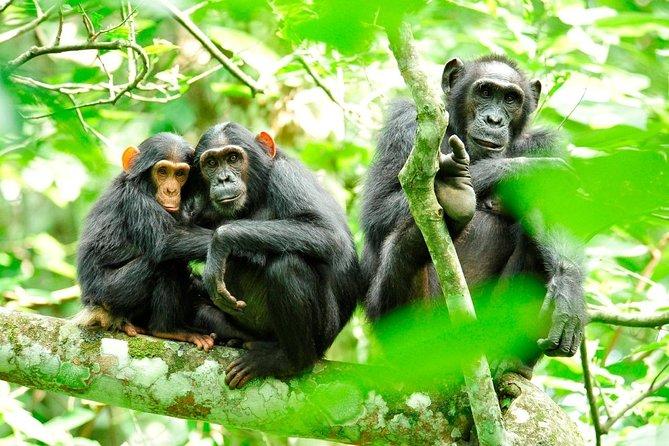 5 Days Lake Mburo National and Chimpanzee Tracking