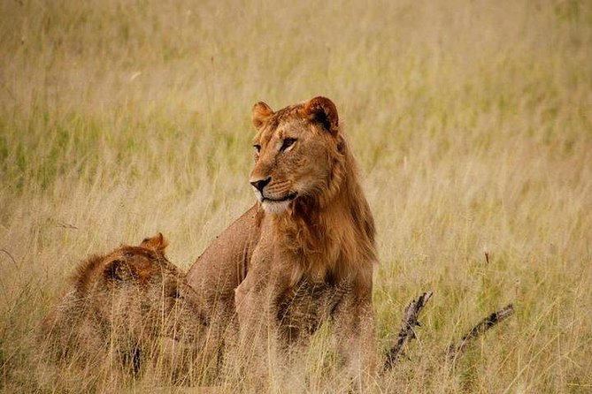 4 Days Kibale National Park & Queen Elizabeth Safari