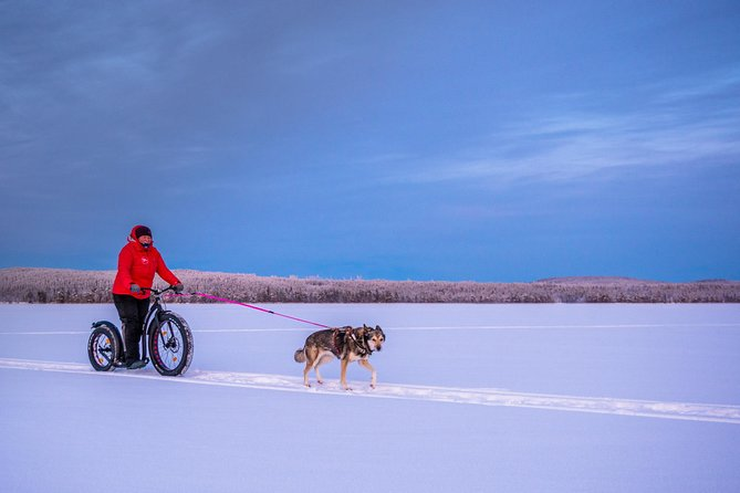 FAT-Kickbike tour with husky