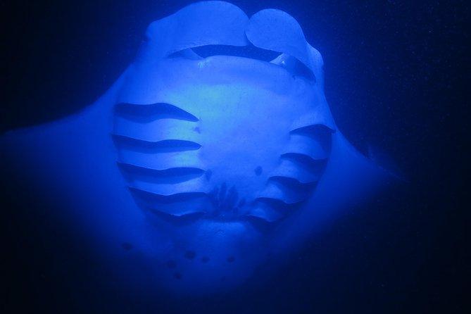 Manta Magic - Night Manta Ray Snorkel