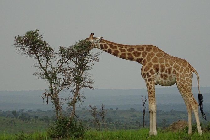 Twelve days Amazing Tour in Uganda