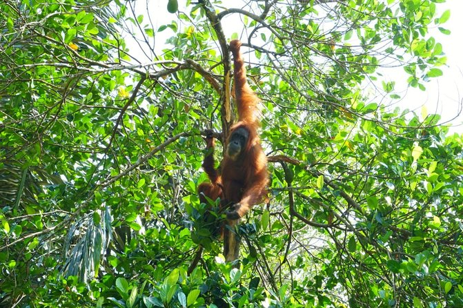 Half-day orangutans adventure in Gunung Leuser photo 7