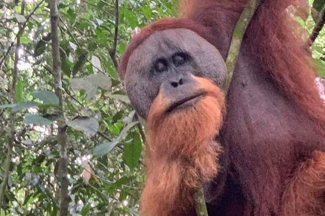 Half-day orangutans adventure in Gunung Leuser photo 2
