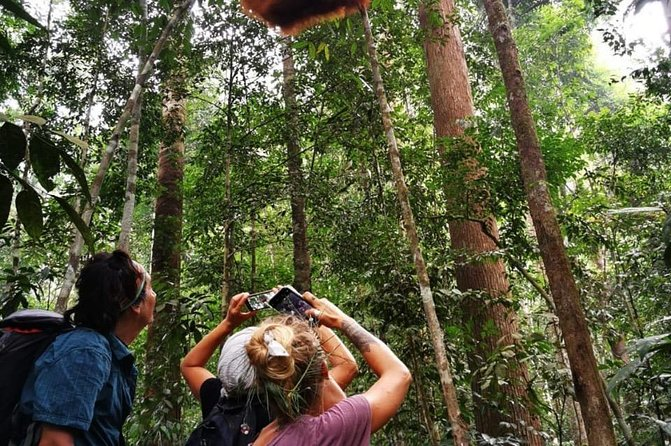 Half-day orangutans adventure in Gunung Leuser photo 8