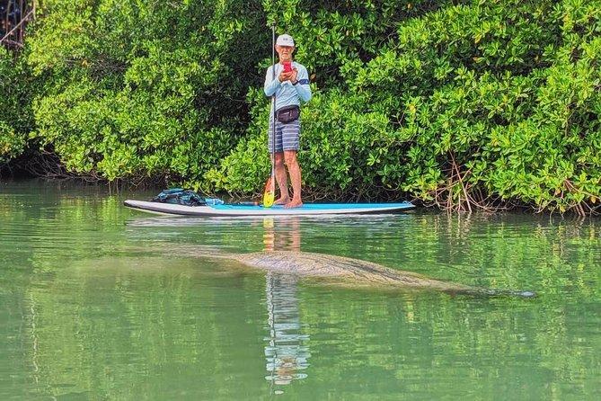 Manatee Photo Safari and Miami Kayak with Paddle Board Tour