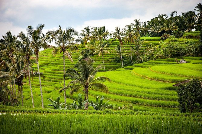1 DAY Jati Rui Rice Terrace & Kecak Dance Appreciation Private Tour 8 Hours / Marga Hero Cemetery, Buddhist Monkey Temple etc./English/Japanese driver included